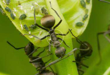 What You Need to Know About ants in Your House